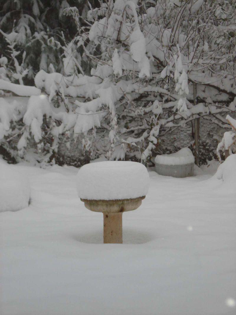 Resized_snowday 001