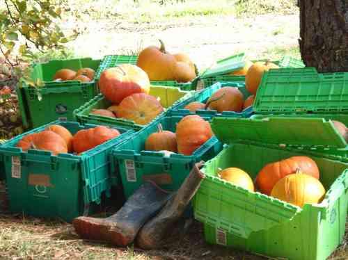 Mtbountyfallharvest