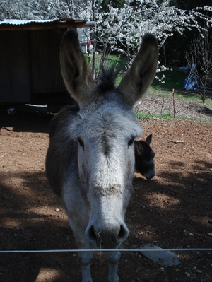 Resized_donkey_017