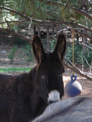Resized_donkey_019