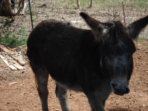 Resized_donkey_020
