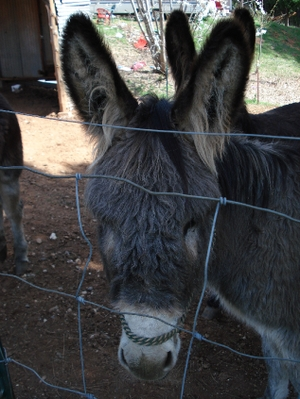 Resized_donkey_021