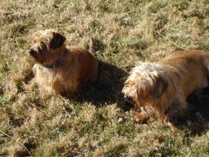 Resized_dogs_024_4