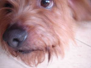 Resized_dogs_030