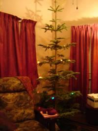 Resized_tree_002