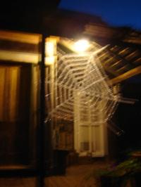 Spinderweb